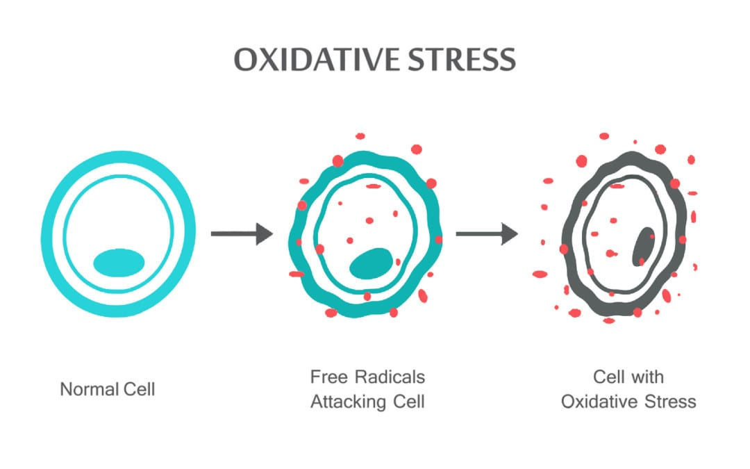 El Paso, TX Oxidative Stress and Antioxidant Defense