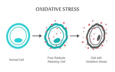 El Paso, TX Oxidative Stress and Antioxidant Defense