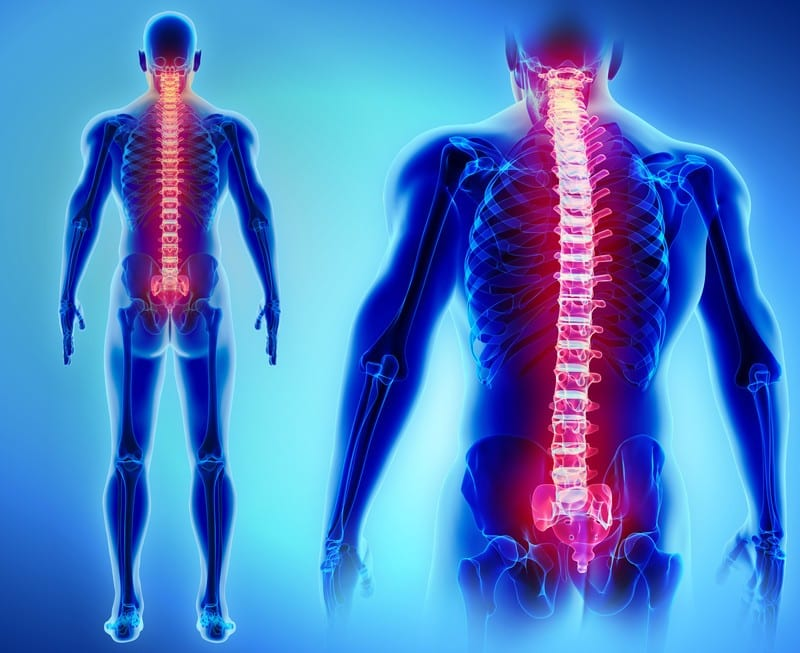 spine antomy 3D human el paso tx