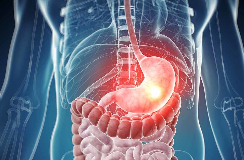 Anatomy of the Digestive System | Wellness Clinic