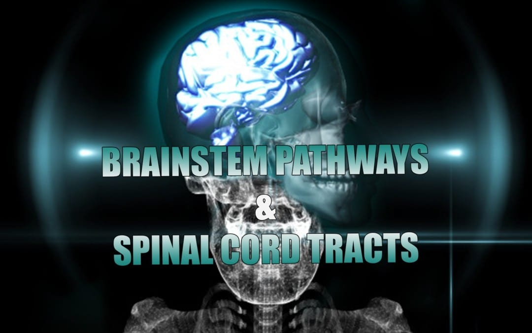 Receptors, Brainstem Pathways And Spinal Cord Tracts | El Paso, TX. | Part I