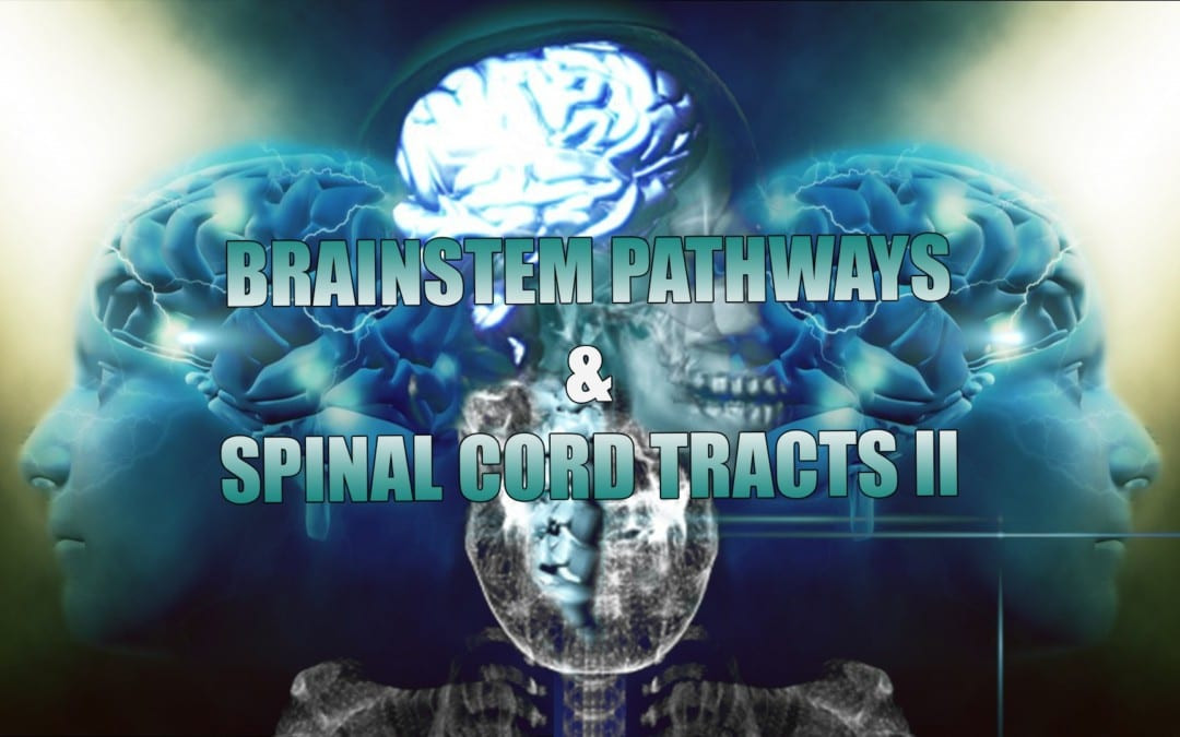 Receptors, Brainstem Pathways And Spinal Cord Tracts | El Paso, TX. | Part II