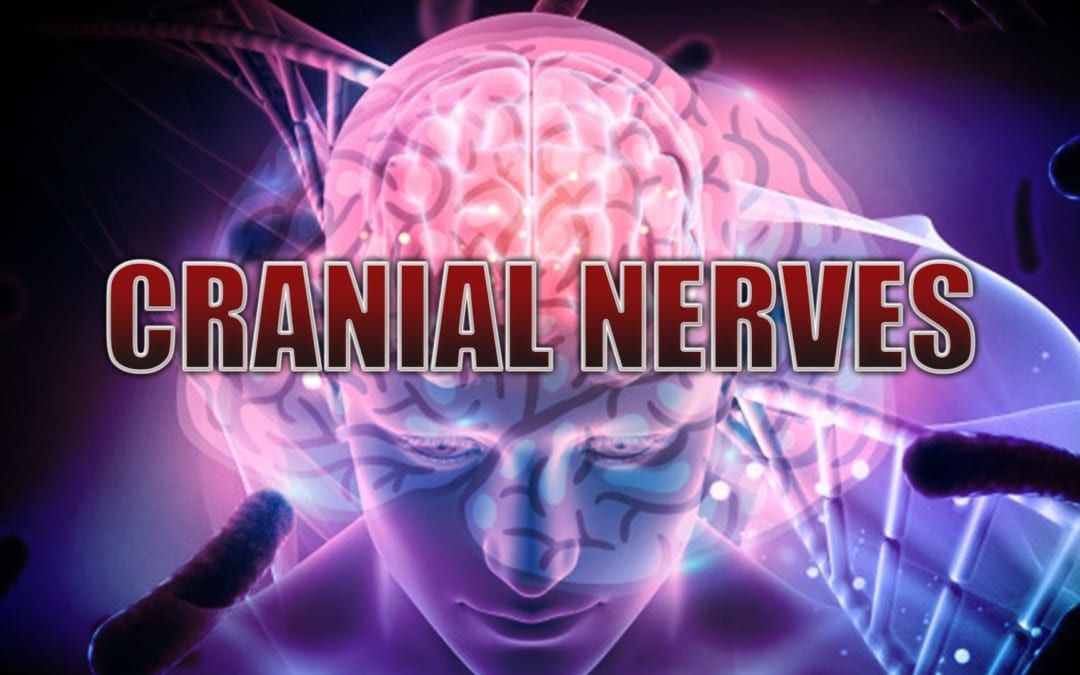 Nervios craneales: Introducción | El Paso, TX.