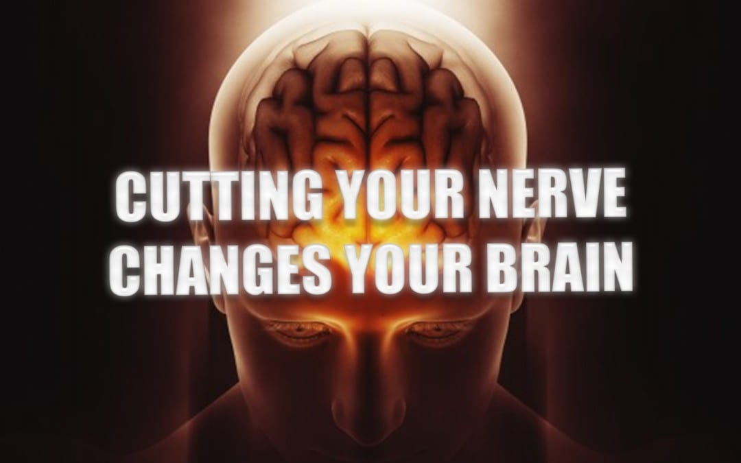 Cutting Your Nerve Changes Your Brain | El Paso, TX.