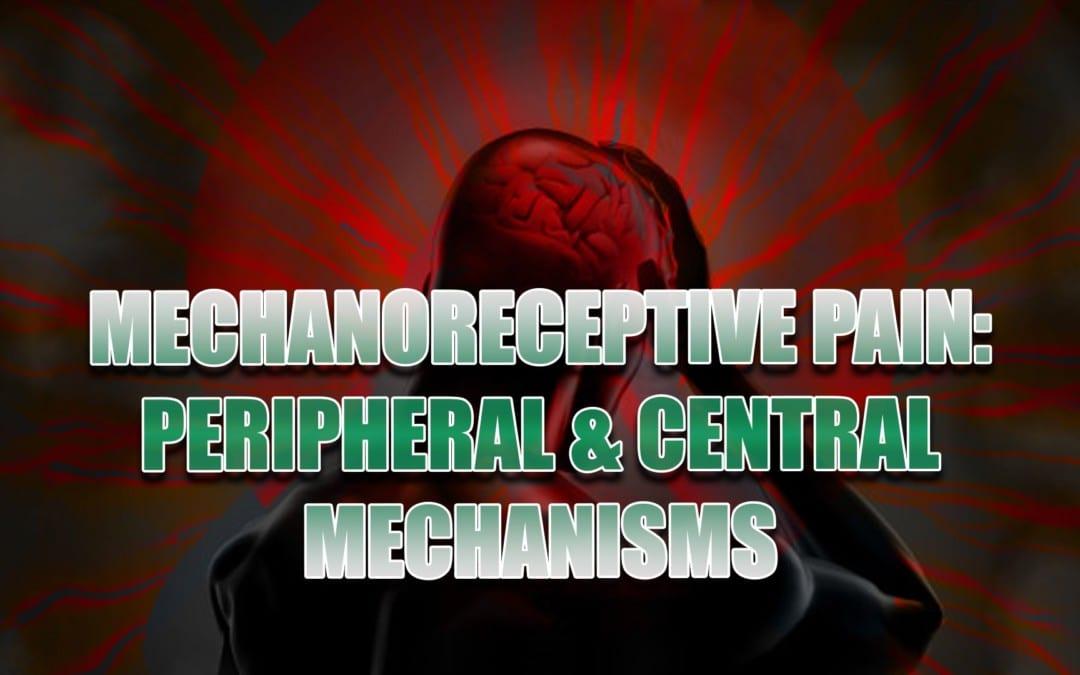 MechanoReceptive വേദന: പെരിഫറൽ ആൻഡ് സെൻട്രൽ മെഷീനുകൾ