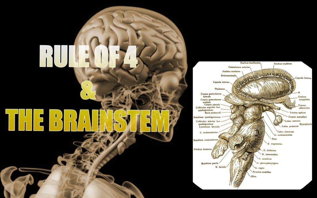 Tronco encefálico y la regla de 4 | El Paso, TX.
