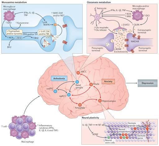 Gambar Target 3 Cytokine di Otak | El Paso, TX Chiropractor