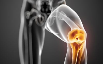 La scienza basilare del ginocchio umano Struttura, composizione e funzione dei menischi