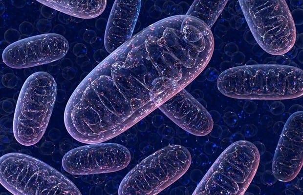 Los roles multidimensionales de los cuerpos cetónicos