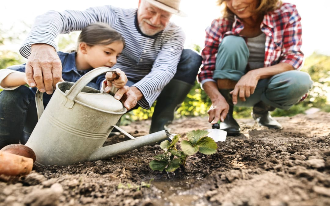 3 Tips That Will Save Your Back While Gardening | El Paso, Tx.