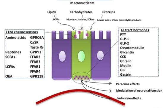 enteroedocrine cells.JPG