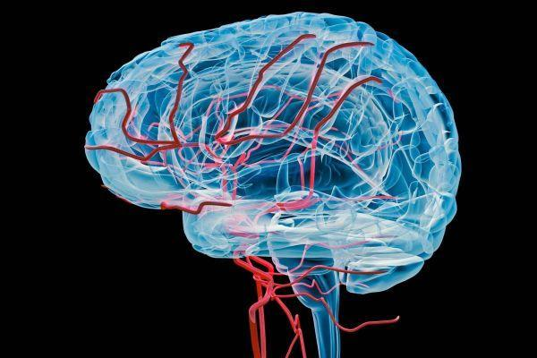 Functional Neurology: 8 Steps to Improve a Leaky Blood-Brain Barrier