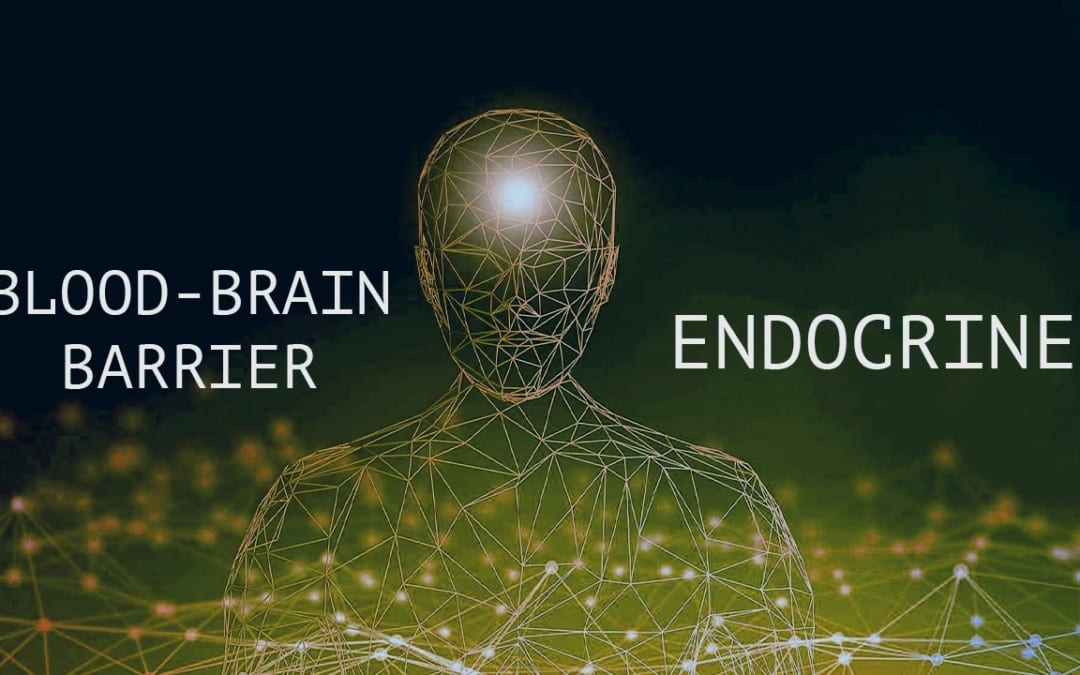 Functional Endocrinology: Blood-Brain Barrier and The Endocrine System
