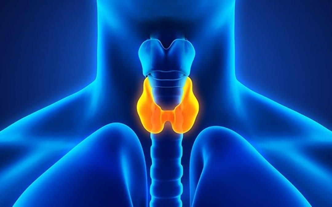 Functional Neurology: What is Hypothyroidism?