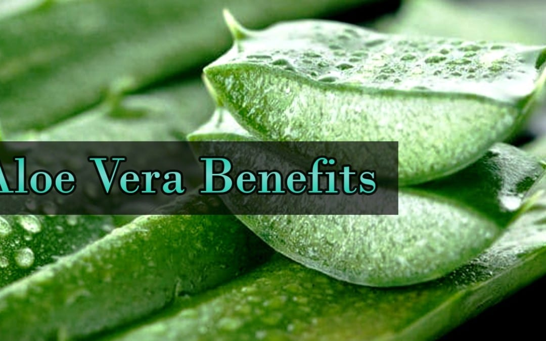 Gli incredibili benefici dell'aloe vera